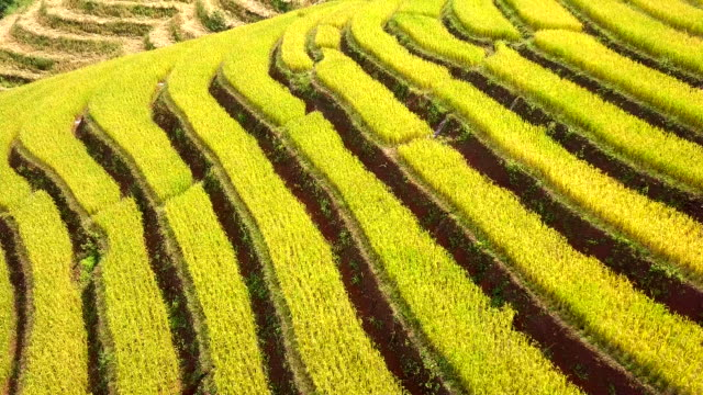 Aerial-view-amazing-landscape-rice-terraces-in-a-beautiful-day-Chiang-Mai-Thailand
