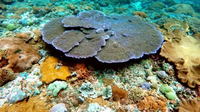 jardín-de-coral-en-el-Océano-Índico-Bali-Indonesia