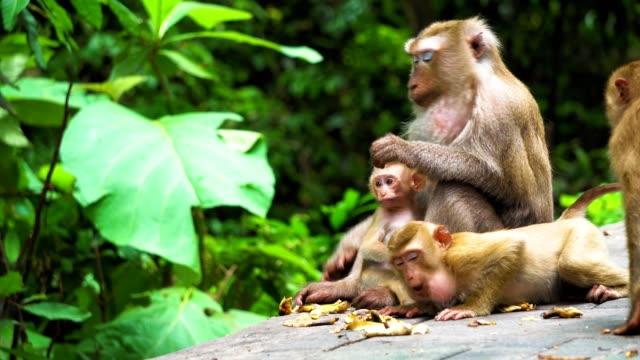 Mamá-de-mono-con-un-cachorro-en-el-Parque-nacional-hábitat-natural-cuidado-y-protección-de-los-animales-los-monos-comen-plátanos
