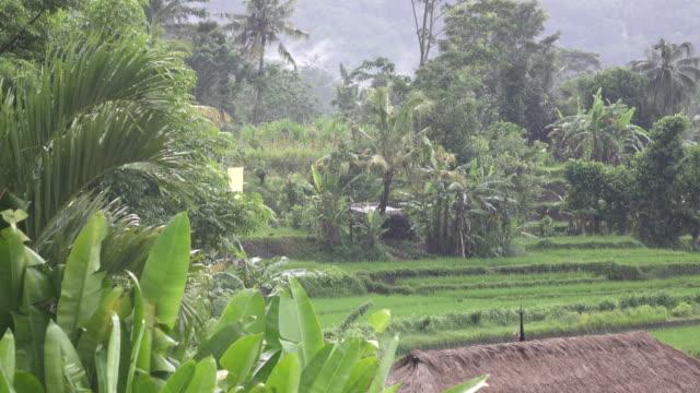 Aufnahmen-über-Reis-Terrasse-und-Palmen-Bäume-Berg-und-Haus-des-Bauern-Bali-Indonesien
