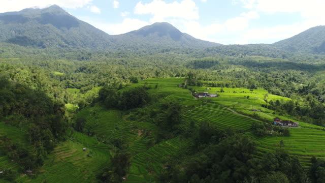 Video-aéreo-en-un-campo-de-arroz-de-paisaje-increíble-en-Bali-Indonesia