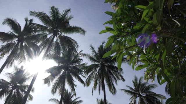 Panoramic-view-from-below-of-tops-of-palm-trees-against-the-background-of-the-solnetsny-blue-sky-in-the-tropical-resort
