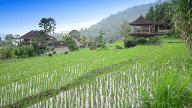 view-on-rice-terraces-of-mountain-and-house-of-farmers-Bali-Indonesia-UHD-4K
