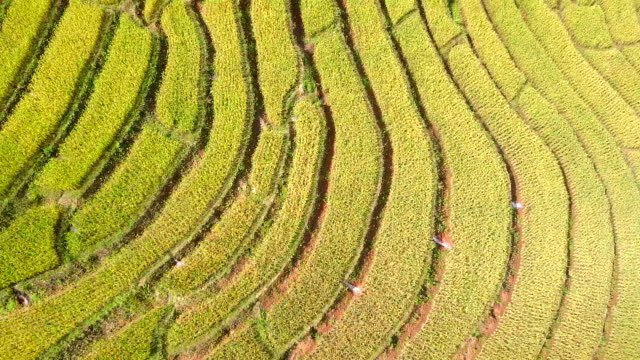 Aerial-view-from-dorn-Rice-Terrace-Rice-terraces-at-pa-pong-pieng-in-Mae-Chaem-Chiang-Mai-north-of-Thailand