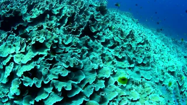 Abundance-reef-and-marine-life-in-Wakatobi-National-Park-Indonesia-