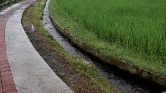 Terrazas-de-arroz-de-Bali-Indonesia