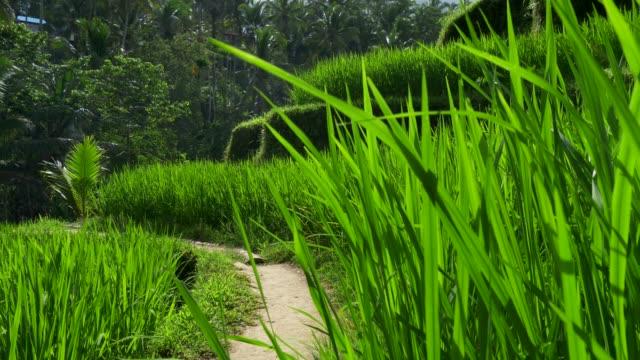 Terrazas-de-arroz-en-Tegallalang-Pueblo-Ubud-Bali-Indonesia-Grúa-de-tiro-4K-UHD
