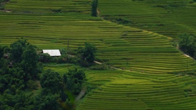 motorcycle-driving-thru-scenic-rice-terrace-fields-in-Sapa-Vietnam-Asia