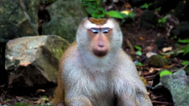 monkey-in-the-rainforest-on-the-rocks