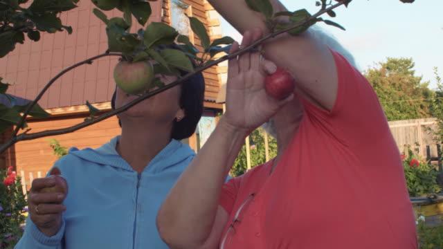 Senior-mujer-jardín-manzana-madura-en-el-huerto-de-frutales-la-cosecha-en-el-día-de-verano