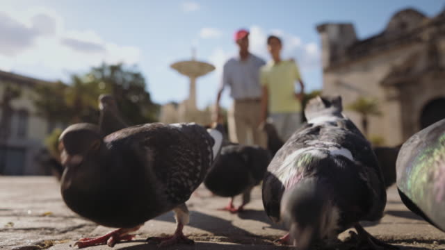 Grandfather-And-Grandchild-Feeding-Pigeons-With-Bread-On-Vacations