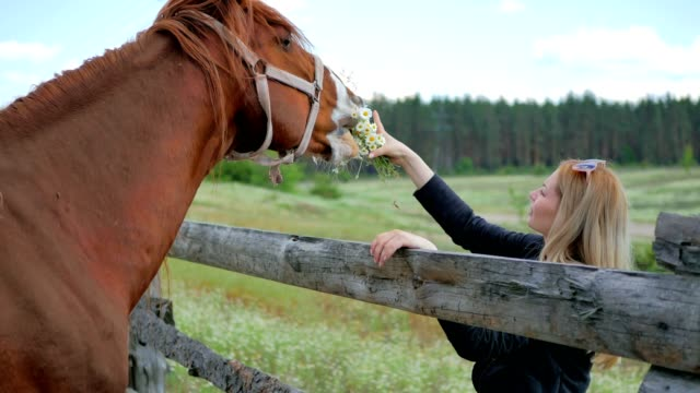 Beautiful-blonde-feed-the-horse-with-flowers-through-the-fence