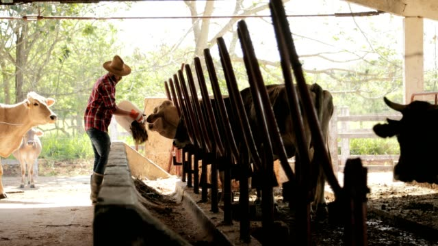 Slow-Motion-Farmer-Peasant-Man-At-Work-In-Farm