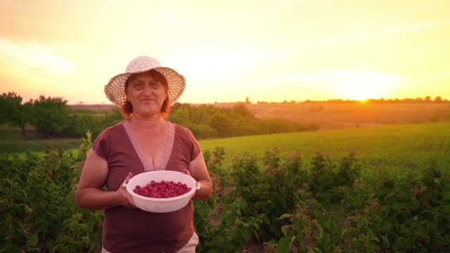 Portrait-of-a-woman-in-white-pants-a-brown-T-shirt-and-a-white-hat-with-a-bowl-of-raspberries-on-the-sunset-background-a-raspberry-picker