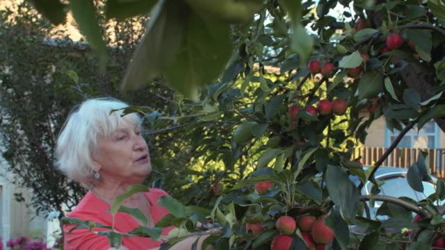 Mujer-adulta-recogida-del-árbol-y-sabor-manzana-madura-en-el-jardín-de-verano