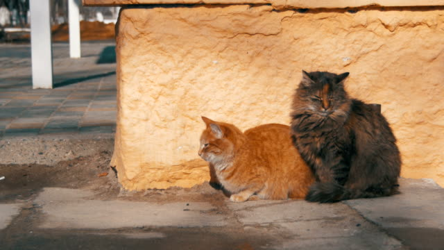 Two-Gray-and-Red-Homeless-Cats-on-the-Street-in-Early-Spring