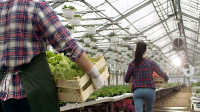 Following-Shot-of-Two-Professional-Farmers/Gardeners-Walking-in-Industrial-Greenhouse-while-Carrying-Boxes-with-Tomatoes-and-Lettuce-