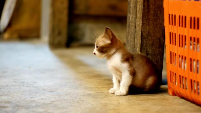 Little-Grey-stray-kitten-sitting-on-the-ground-at-night-street-market