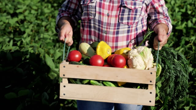 Farmer-carries-a-wooden-box-with-different-vegetables