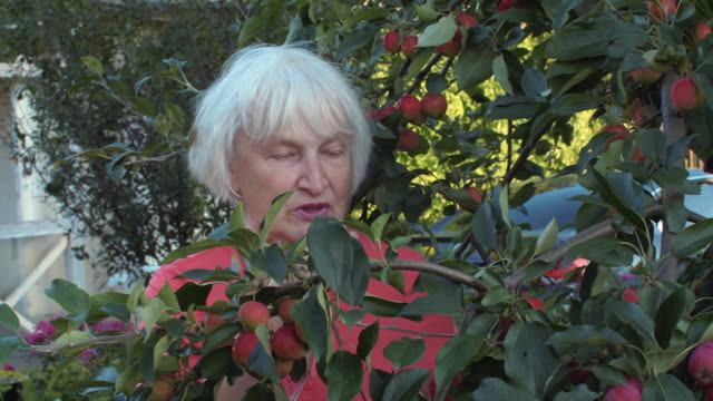 Anciana-en-jardín-de-la-manzana-entre-frutales-en-patio-de-campo