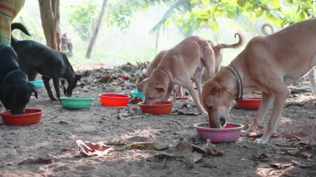 Feeding-in-dog-pound-Hungry-dogs-eat-their-food-at-the-dog-sanctuary