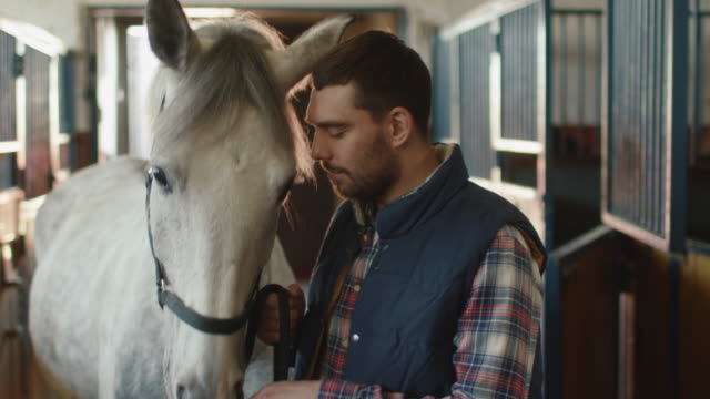 Man-is-stroking-and-feeding-a-white-horse-with-hay-in-stable-