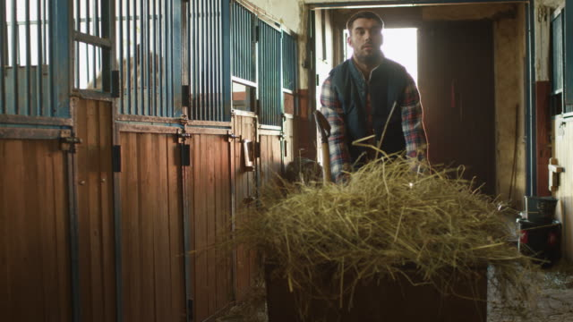Man-is-rolling-a-cart-with-hay-into-a-stable-in-order-to-feed-horses-