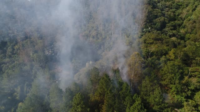 Forest-Fire---Burning-Tree-Aerial