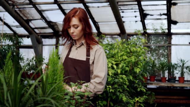 Mujer-bonita-pelirroja-es-pulverizar-las-plantas-y-comprobación-de-plántulas-en-invernadero-espacioso-Profesión-cultivo-de-flores-lugar-de-trabajo-y-la-gente-de-concepto-