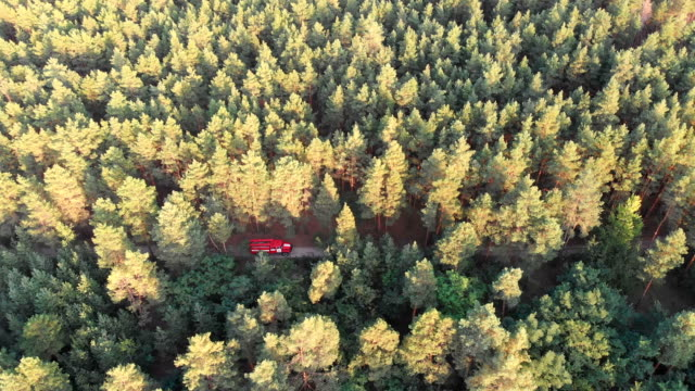 Top-view-from-the-drone-to-the-Red-Fire-Truck-Driving-along-the-Road-in-a-Pine-Forest