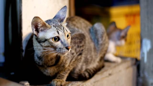 Little-Grey-stray-cat-and-kitten-sitting-on-the-ground-at-night-street-market