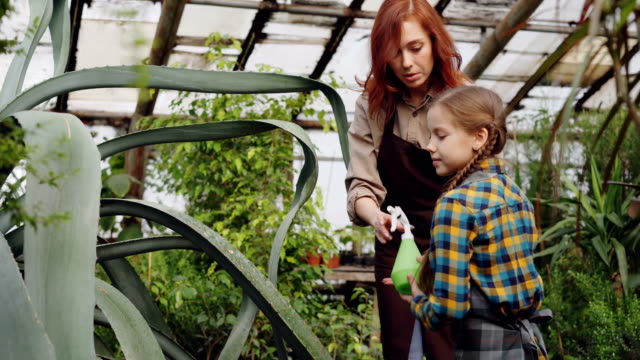 Young-woman-professional-gardener-is-teaching-her-adorable-little-daughter-to-wash-leaves-of-large-evergreen-plant-with-spray-bottle-inside-greenhouse-