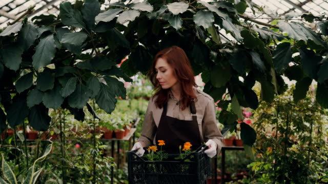 Cheerful-greenhouse-owner-is-walking-in-greenhouse-carrying-box-of-pot-flowers-looking-around-and-smiling-Small-business-successful-people-and-nature-concept-