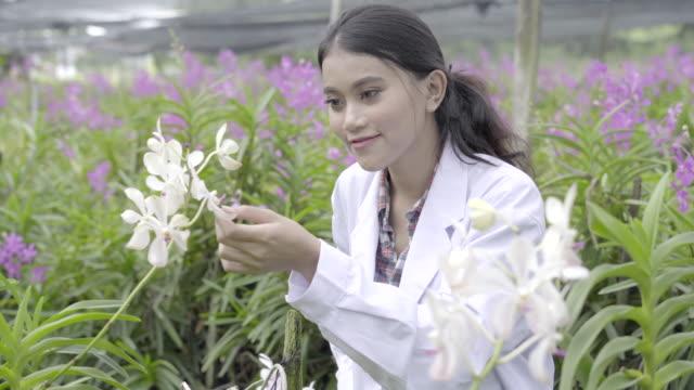 Orquídea-investigadores-están-trabajando-en-el-jardín-de-orquídeas-Asia-Tailandia