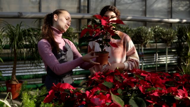 Young-smiling-female-florist-in-apron-showing-flowerpots-with-red-poinsettia-to-female-customer-Young-woman-carefully-examines-the-flower