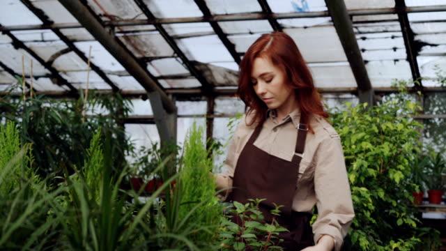 Granjero-de-sexo-femenino-atractivo-usar-delantal-es-rociar-las-plantas-con-agua-mientras-trabajaba-dentro-gran-invernadero-Profesión-cultivo-de-flores-lugar-de-trabajo-y-la-gente-de-concepto-