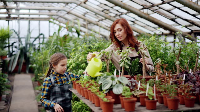 Female-farmer-and-her-adorable-daughter-are-busy-sprinkling-plants-with-water-while-working-together-in-glasshouse-Many-pots-with-seedlings-are-visible-