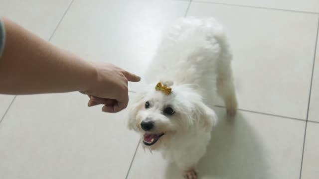 Frau-Hund-Besitzer-Training-Haustier-zu-sitzen-und-warten