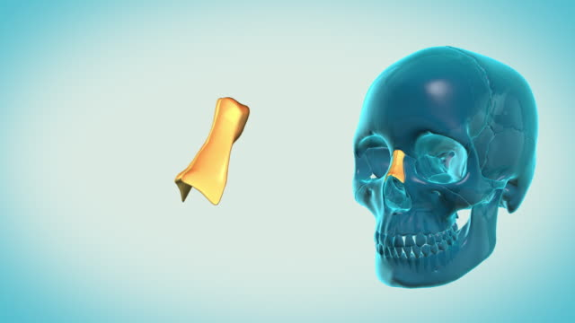 Nasal-Bone-with-a-heavenly-background