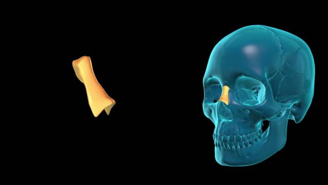 Nasal-Bone