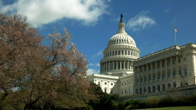 capitol-building-and-flowering-cherry-trees-in-washington-dc