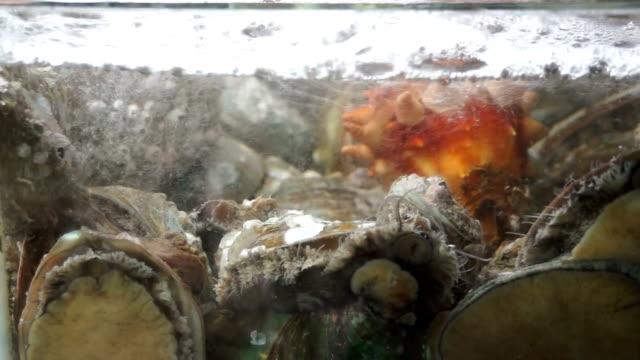 Sea-urchins-in-showcase-for-sale-at-Noryangjin-Fish-Market