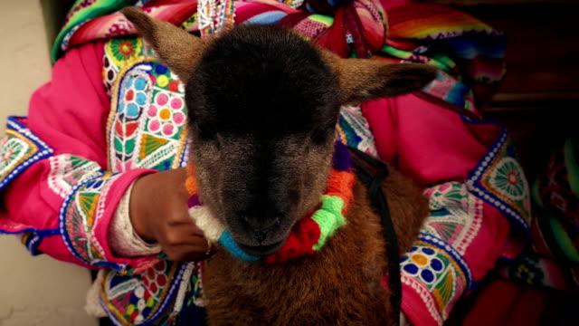 Cordero-llevó-a-cabo-por-América-del-sur-mujer-en-vestido-tradicional