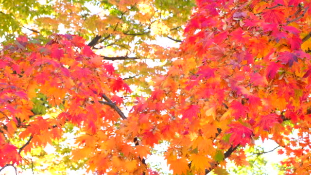 Beautiful-in-Autumn-Background