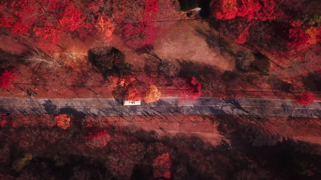 Luftbild-herbstlichen-Wald-der-Naejangsan-National-Park-Südkorea-