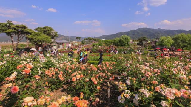 Rosa-und-gelbe-rose-Festival-Menschen-Zeitraffer-in-Korea