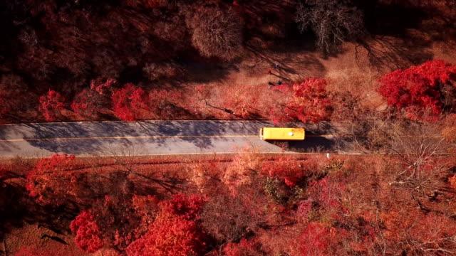 Luftaufnahme-Autofahren-auf-Landstraße-im-herbstlichen-Wald-Naejangsan-National-Park-Südkorea-