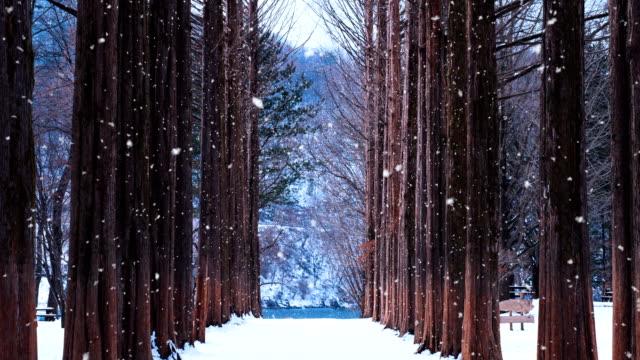 Row-tree-and-snow-falling-in-Nami-island-South-Korea-