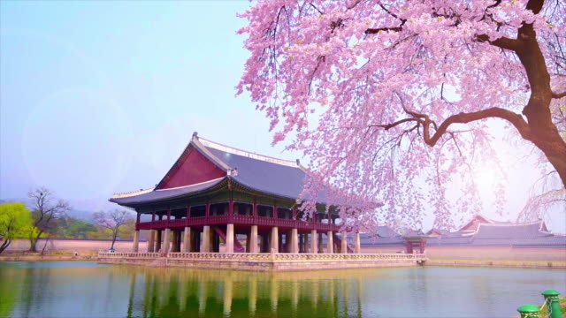cherry-blossom-in-spring-of-Gyeongbokgung-Palace-in-seoul-korea-