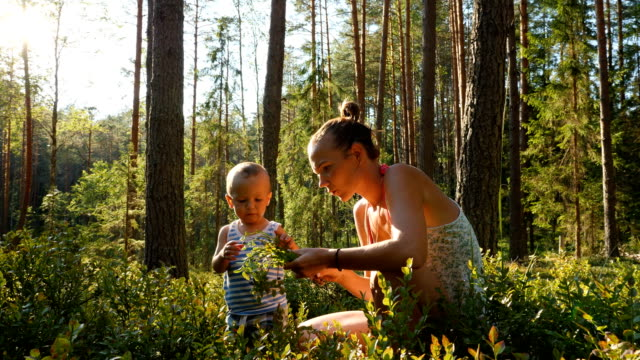 Mother-and-son-at-age-of-one-year-collect-and-eat-wild-blueberries